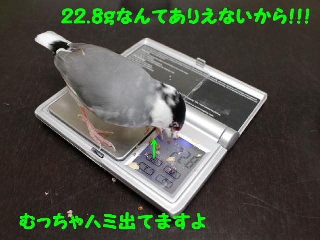 b0158061_20272730.jpg