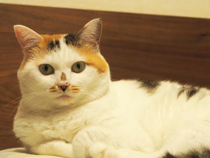 大自然の中で、うちの猫のこと_d0193569_12592048.jpg