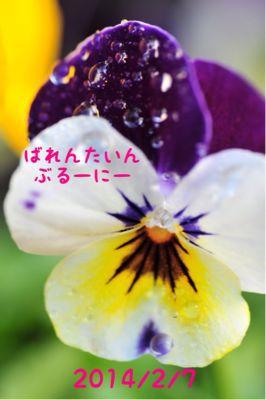 b0099276_1824332.jpg
