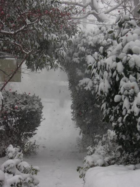 吹雪の中の搬入_d0322102_16135495.jpg