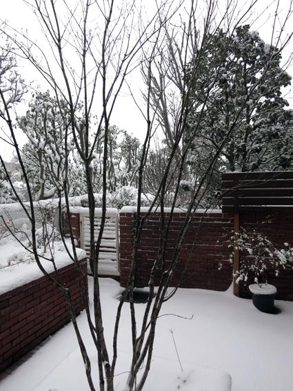 雪化粧_a0148909_15122810.jpg
