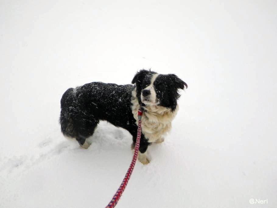 【犬】雪の中を・・_f0141609_11141062.jpg
