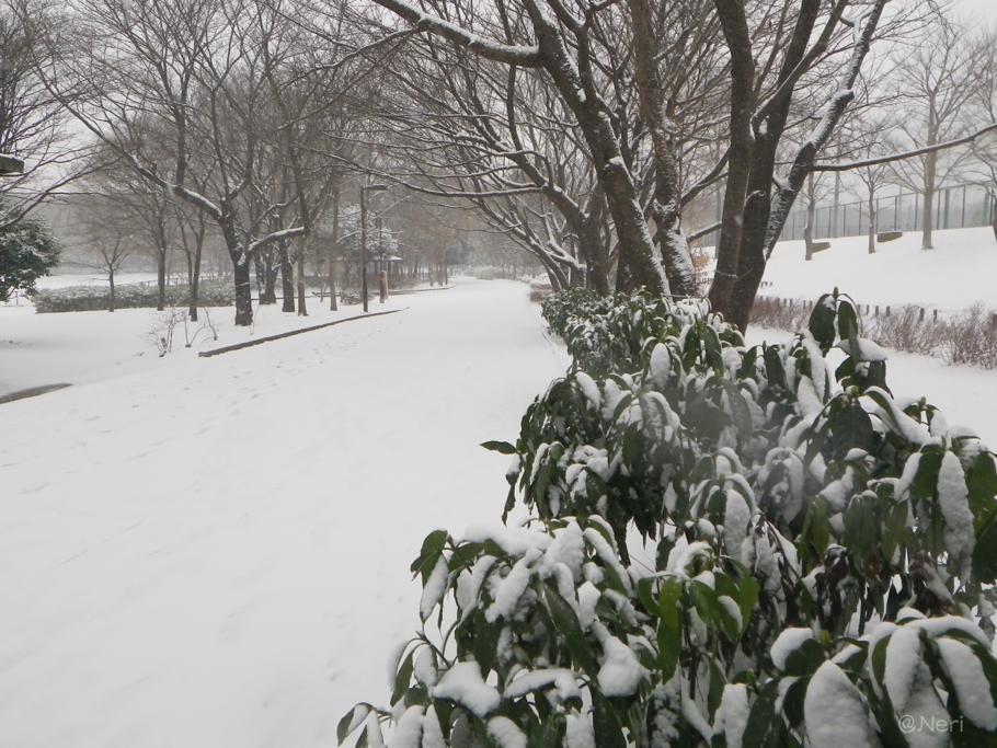 【犬】雪の中を・・_f0141609_11141339.jpg