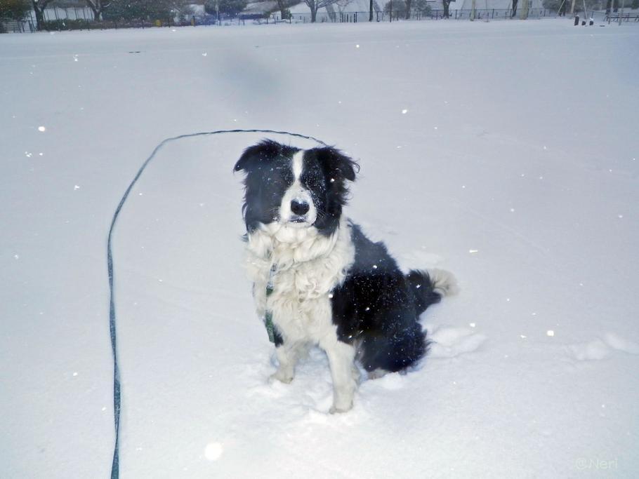 【犬】雪の中を・・_f0141609_1114194.jpg
