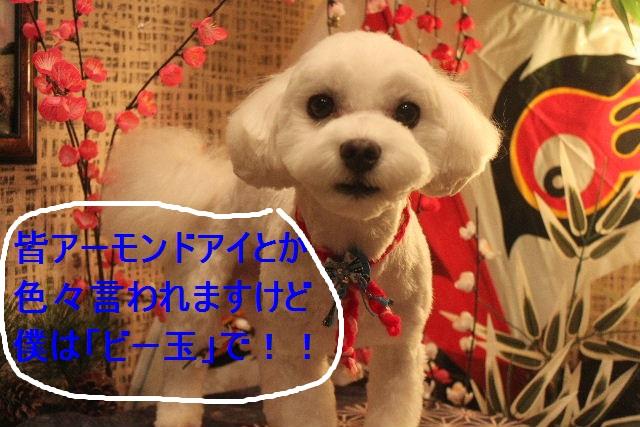 b0130018_2153287.jpg