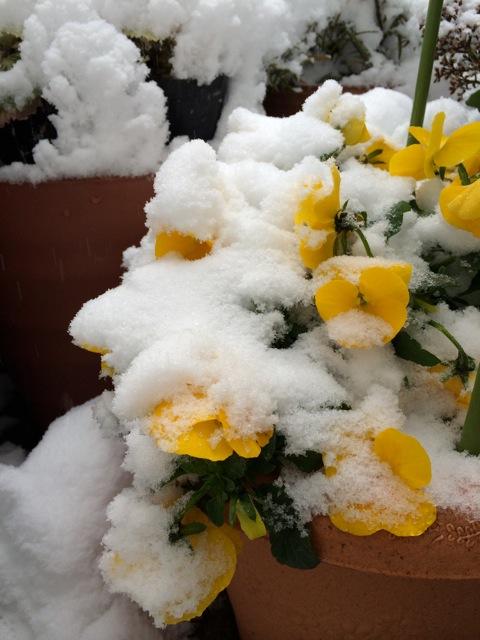 冬のランチはミングルです。_e0141819_12355516.jpg