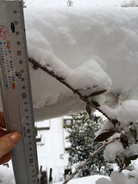 冬のランチはミングルです。_e0141819_12452979.jpg