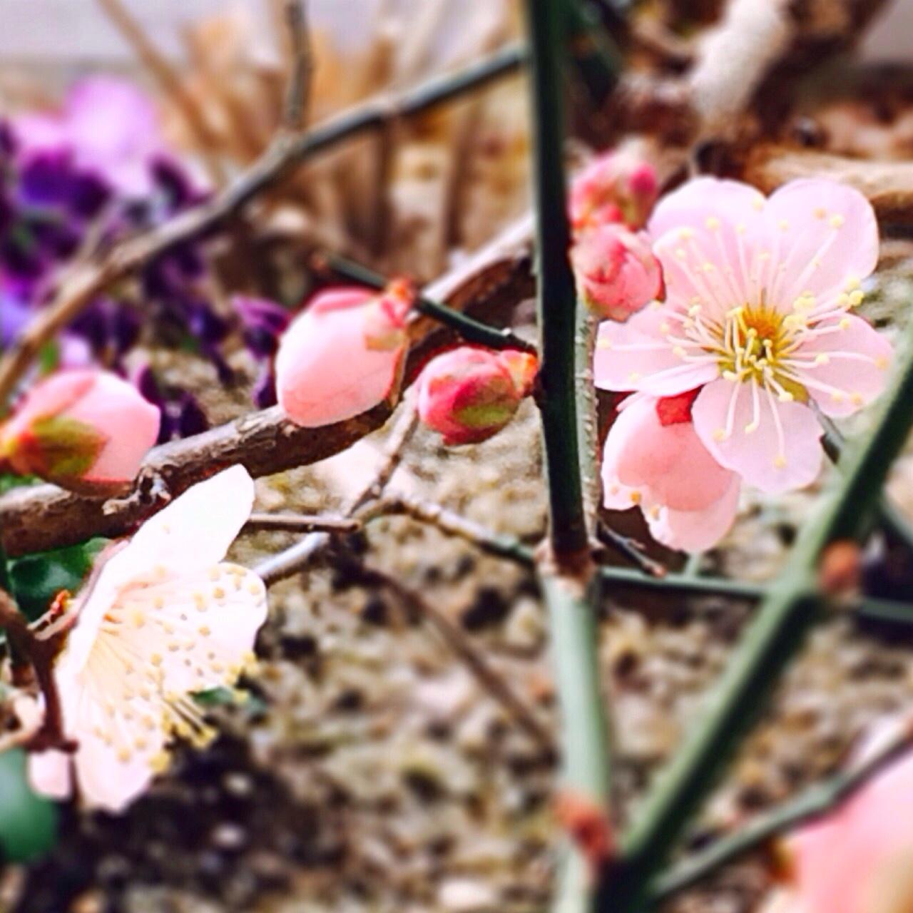 春の訪れですね*\\(^o^)/*_f0241925_13153776.jpg