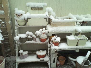 うちのベランダの積雪観察?_a0275527_18400191.jpg