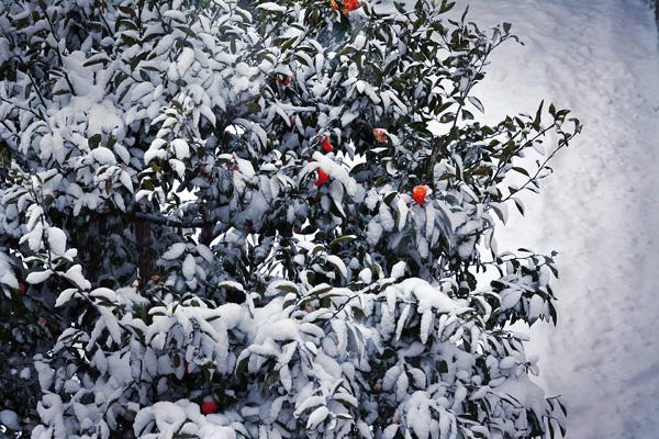 きょうは吹雪いてました_b0175635_21421244.jpg
