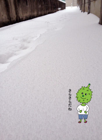 20年に一度の大雪_d0156336_22425179.jpg