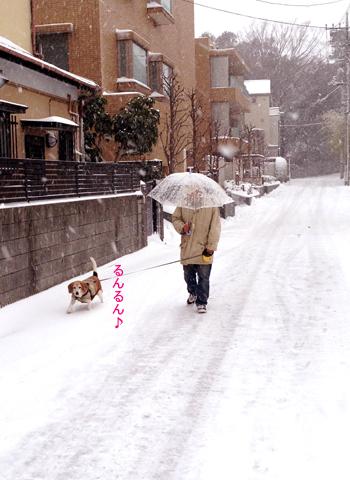 20年に一度の大雪_d0156336_22431345.jpg
