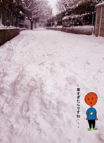 20年に一度の大雪_d0156336_2244111.jpg