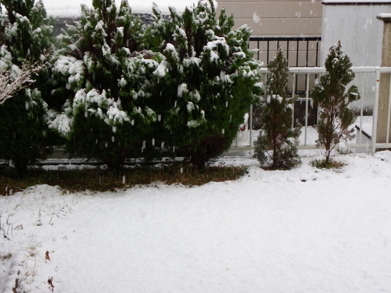 ムラサキツバメシジミ 2月7日雪の中で・・・_d0254540_12381662.jpg