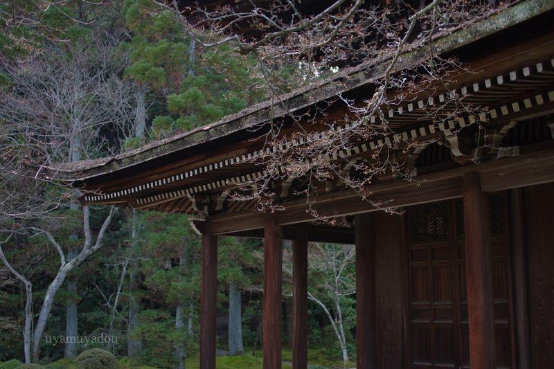 京都・一休寺_a0157263_13453752.jpg
