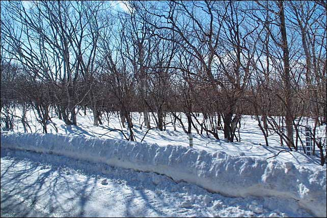 那須高原・・・冬の大丸温泉~友愛の森_b0053765_19452438.jpg