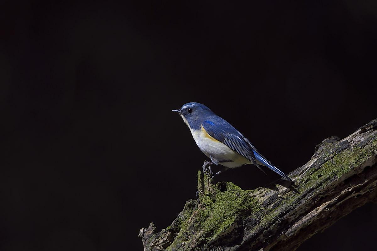 綺麗な成鳥との出会い(3)_d0125872_143443.jpg
