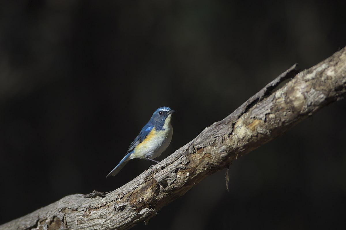 綺麗な成鳥との出会い(3)_d0125872_16917.jpg