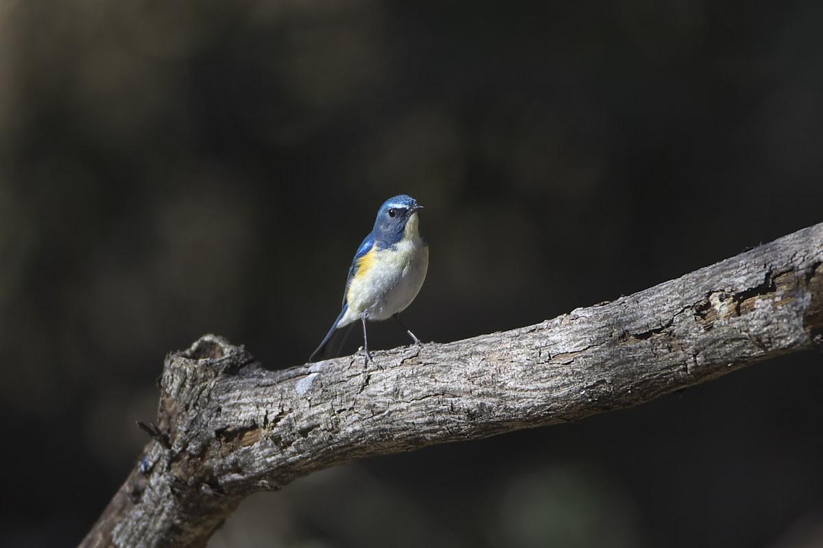 綺麗な成鳥との出会い(3)_d0125872_184343.jpg