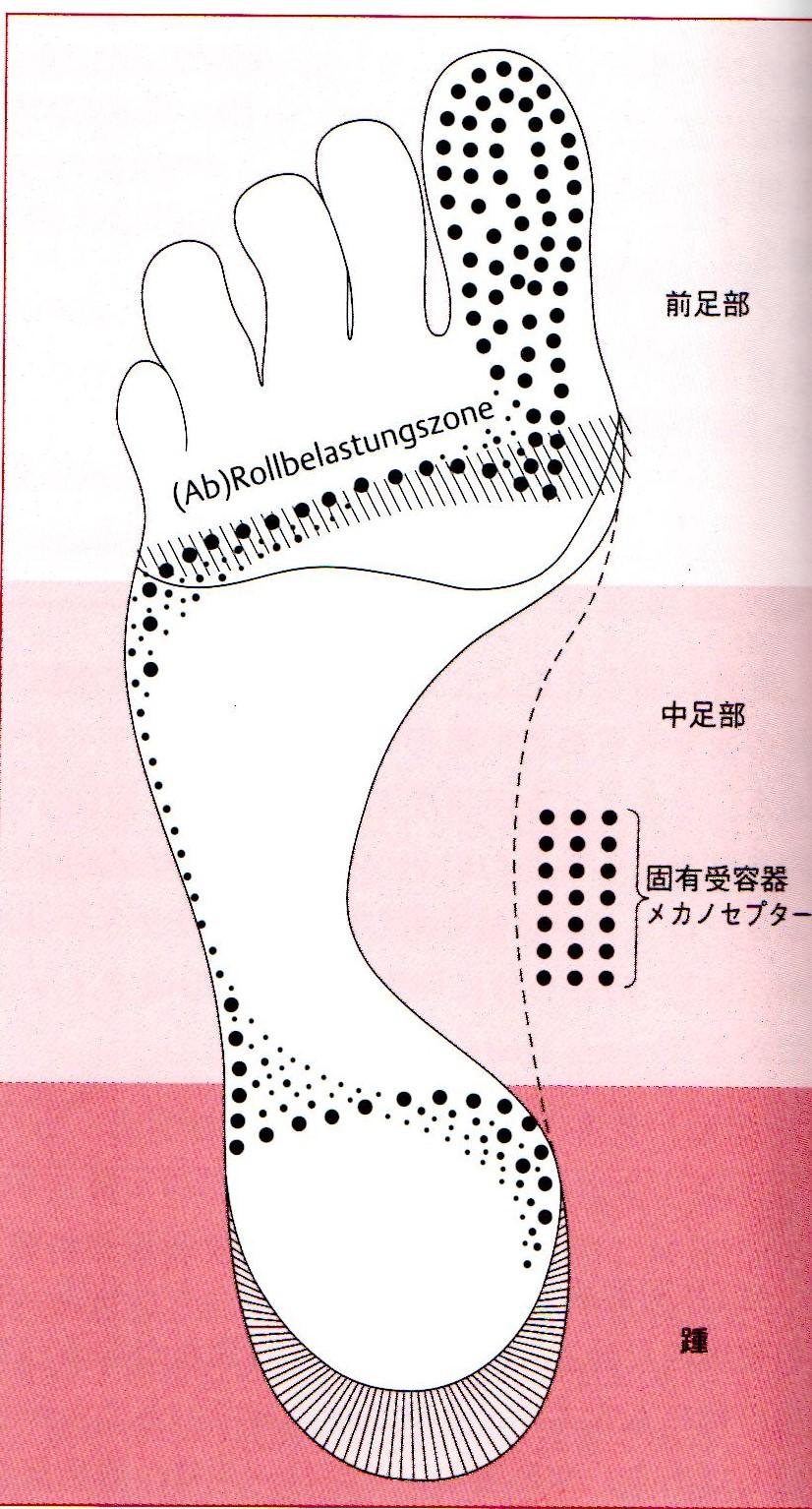 足の指を使う重要性_e0326688_17272076.jpg