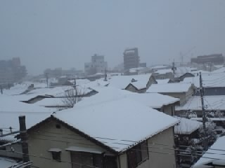 頑張ってます!大雪の日のお見合い_a0283796_1256387.jpg