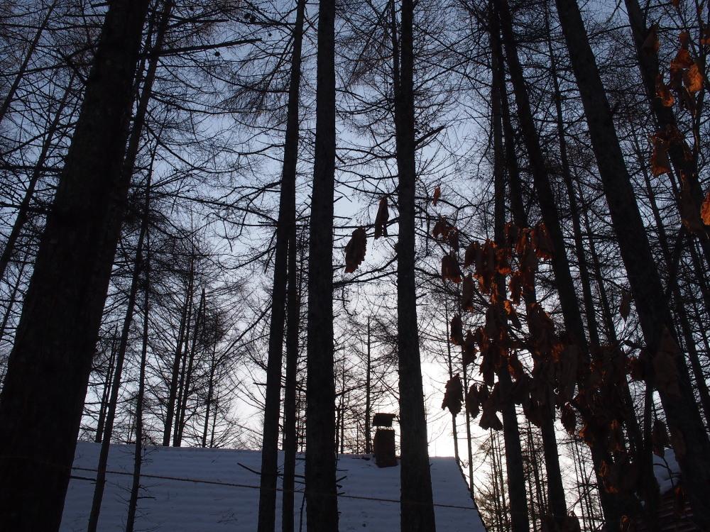 今朝は厳しい冷え込み・・マイナス22℃/宿のまわりの風景_f0276498_16532952.jpg