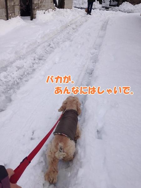 b0067012_1035772.jpg