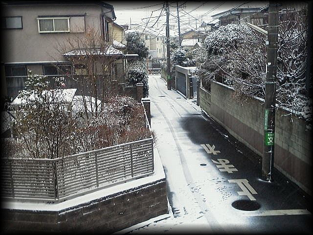 「 大雪・・・ 」_b0133126_12345742.jpg