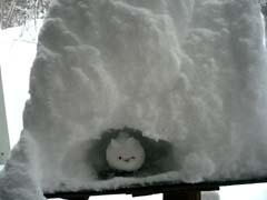 ♪雪が降る♪_d0127634_11143559.jpg