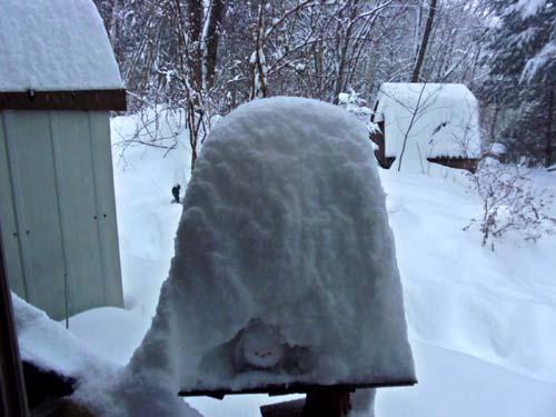 ♪雪が降る♪_d0127634_11176.jpg