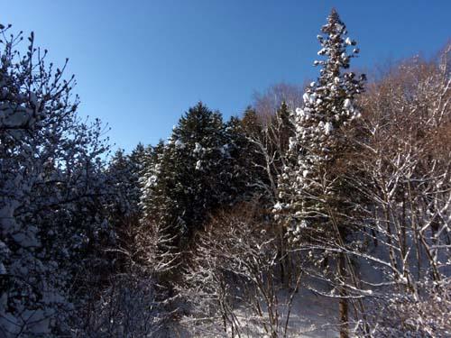 ♪雪が降る♪_d0127634_11264957.jpg