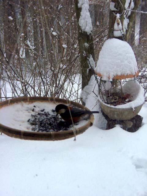 ♪雪が降る♪_d0127634_11484.jpg