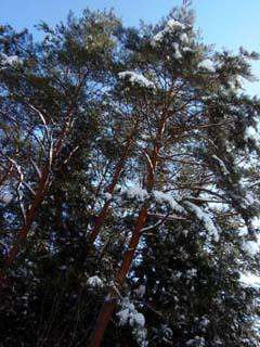 ♪雪が降る♪_d0127634_1152881.jpg