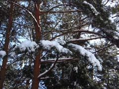 ♪雪が降る♪_d0127634_1154765.jpg
