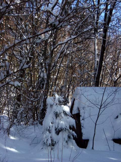 ♪雪が降る♪_d0127634_117101.jpg
