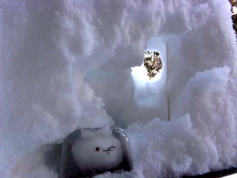♪雪が降る♪_d0127634_11911100.jpg