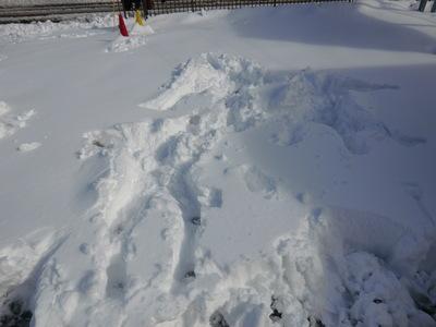 雪はつらいよ…_e0114857_1148854.jpg