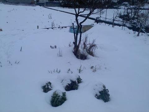 雪の中、収穫へ行ってきた。_e0121558_20401640.jpg