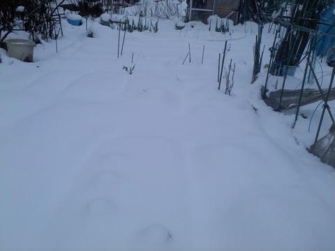 雪の中、収穫へ行ってきた。_e0121558_20402039.jpg