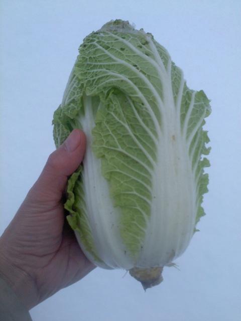 雪の中、収穫へ行ってきた。_e0121558_20403076.jpg