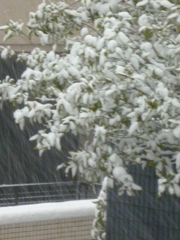 大分合同新聞と ベルギー♥New Treeのチョコレート♪ 代官山の 雪の朝~꒰ღ˘◡˘ற✯♥*・。♬♪_a0053662_17484194.jpg