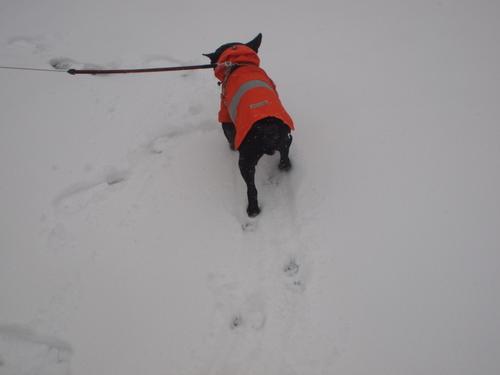 2014 snow day_e0243765_1015365.jpg