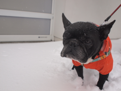 2014 snow day_e0243765_1024280.jpg