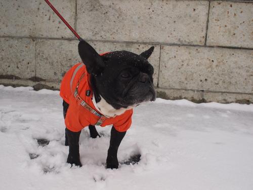 2014 snow day_e0243765_9574376.jpg