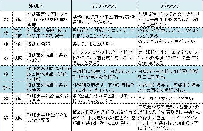 キタアカシジミは栃木県にもいた!!_a0146869_19135012.jpg