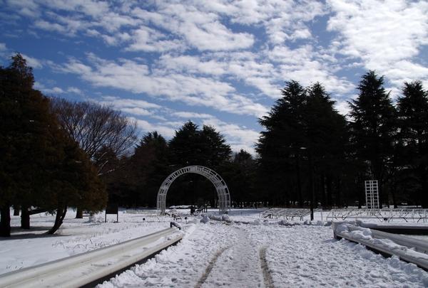 渋谷~代々木公園_a0248481_17125997.jpg