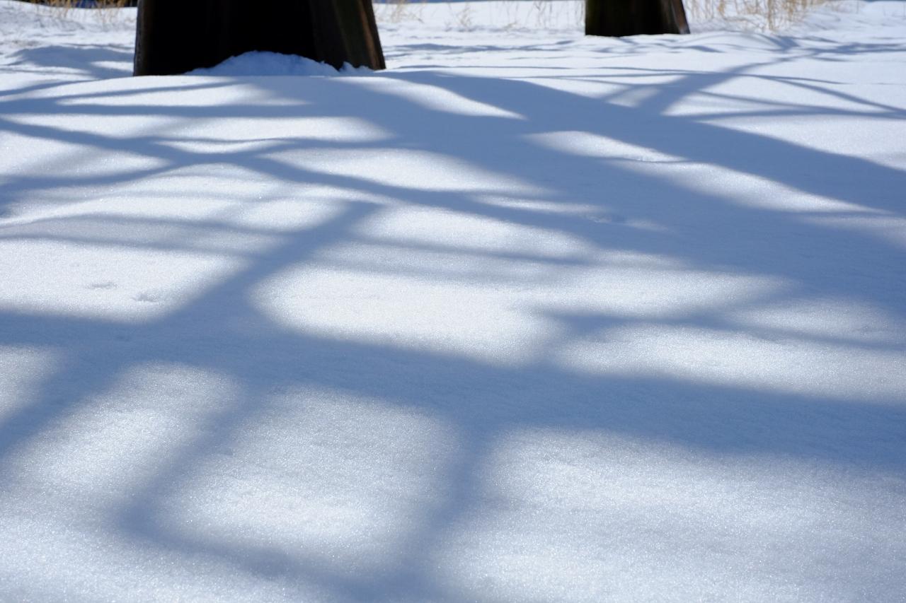 大雪の翌日_e0001789_22484957.jpg