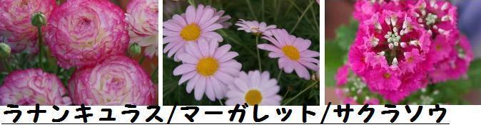 f0203094_9301940.jpg