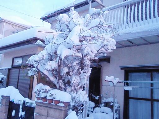 凄い積雪でした!_a0207196_1323342.jpg