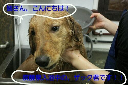 b0130018_16351389.jpg